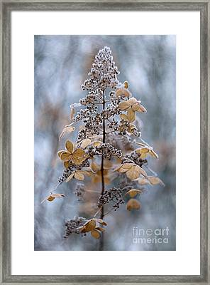 Winter Lace Framed Print by Jacky Parker