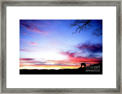 Winter Lamb Sunrise Framed Print by Thomas R Fletcher