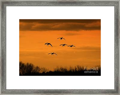 Winter Landing No.2 Framed Print