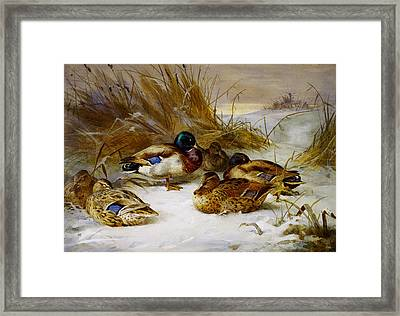 Winter Landscape With Mallard Framed Print by Celestial Images