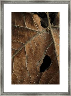 Winter Leaf Framed Print by Daniel Kasztelan