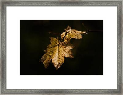 Winter Leaves Framed Print by Ron Roberts
