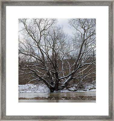 Winter  Leif Sohlman Framed Print