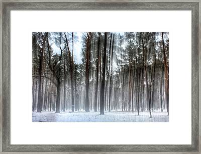 Winter Light In A Forest With Dancing Trees Framed Print