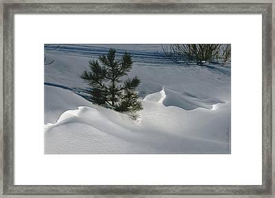 Winter Light Framed Print by Kae Cheatham