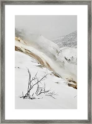 Winter Limbs Framed Print