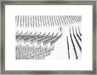 Winter Lines Framed Print