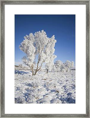 Winter Magic Framed Print by Pat Speirs
