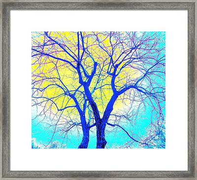 Winter Marriage Of Two Trees Framed Print by Ann Johndro-Collins
