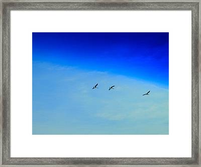 Winter Migration Framed Print