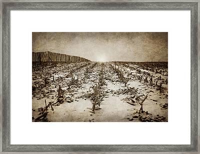 Winter Morn Framed Print by Nikolyn McDonald