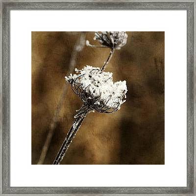 Winter Morning Framed Print by Bonnie Bruno
