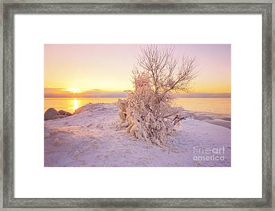 Winter Sunrise Framed Print by Charline Xia