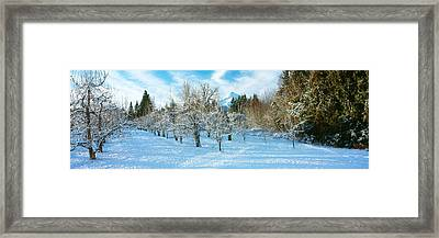 Winter Morning In The Pear Orchard Framed Print