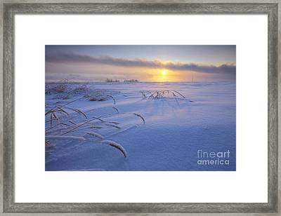 Winter Morning On The Prairie Framed Print by Dan Jurak