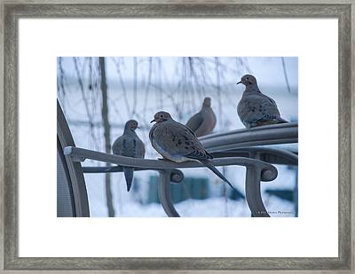Framed Print featuring the photograph Winter Mourning by Phil Abrams