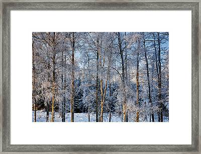 Winter Nature Ans Scenery Framed Print