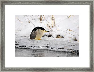 Winter Night Heron Framed Print by Marty Fancy