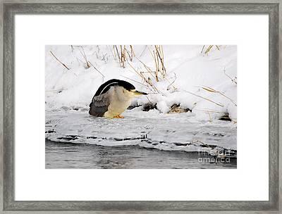 Winter Night Heron Framed Print