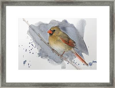 Winter Northern Cardinal Framed Print by Betty LaRue