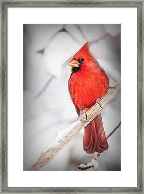 Winter Northern Cardinal Framed Print by Jana Thompson