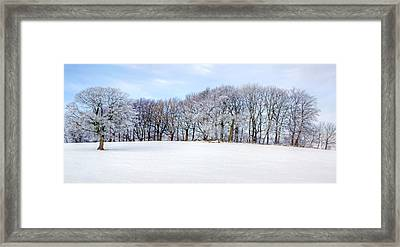 Winter Oak Framed Print by David Birchall