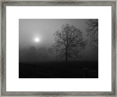 Winter Oak In Fog Framed Print