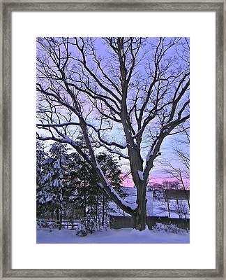 Winter Oak 2 Framed Print