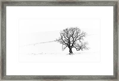 Winter Oak Tree Framed Print by Tim Gainey
