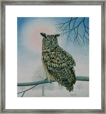 Winter Owl Framed Print by Ditz
