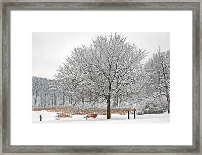 Winter Park Framed Print