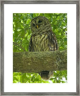 Winter Park Florida Owl Framed Print