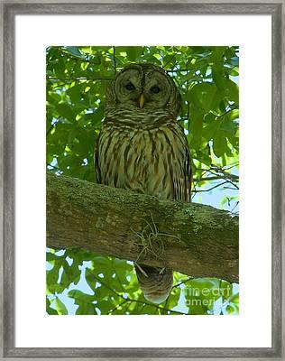 Winter Park Owl Framed Print