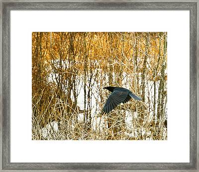 Winter Passage Framed Print by Judy Wood