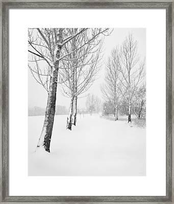 Winter Path Framed Print