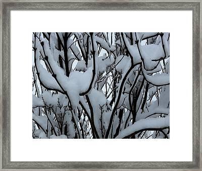 Winter Pattern 1 Framed Print by Debbie Finley