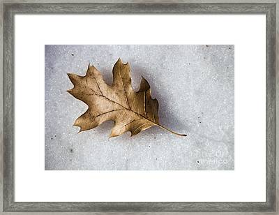 Winter Framed Print by Peggy Hughes