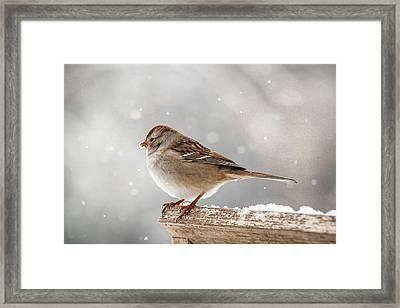 Winter Perch Framed Print