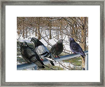 Winter Pigeon Party Framed Print