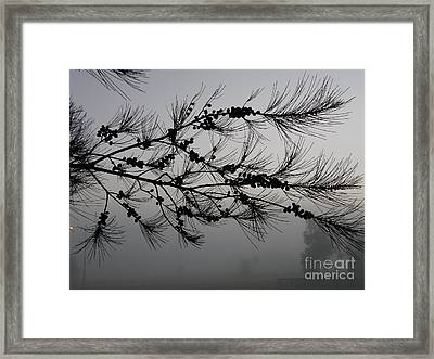 Winter Pine Branch Framed Print
