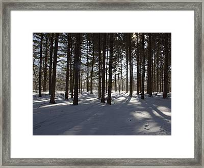Winter Pines Framed Print by Daniel Sheldon