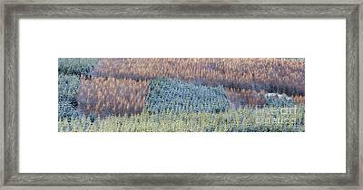 Winter Pines Scotland Framed Print by Tim Gainey