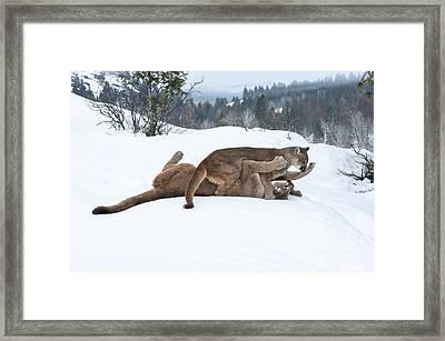 Winter Playground Framed Print by Sandra Bronstein