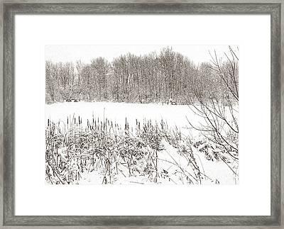Winter Pond Framed Print