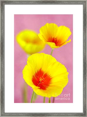Winter Poppies Framed Print by Douglas Taylor