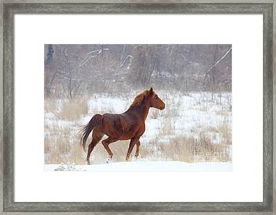 Winter Proud Framed Print by Mike  Dawson