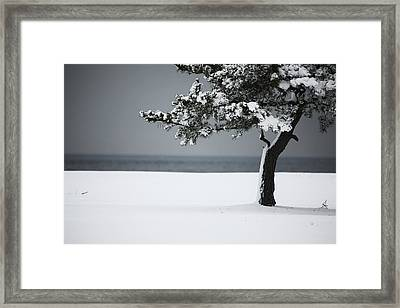 Winter Quiet Framed Print by Karol Livote