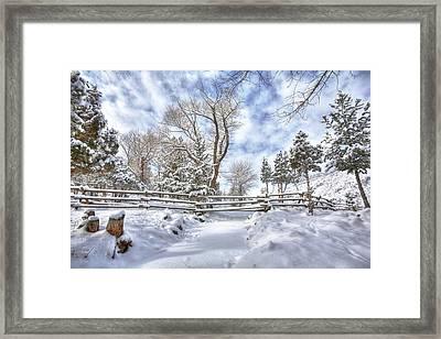 Winter Radiance Framed Print
