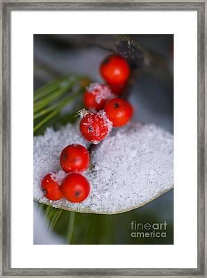 Winter Red Berries Framed Print by Birgit Tyrrell