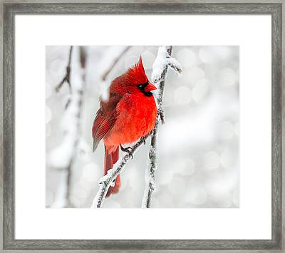 Winter Red Framed Print